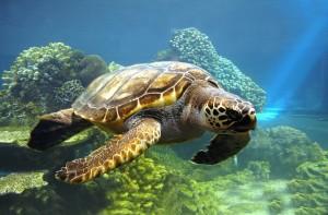 sea turtle looks like
