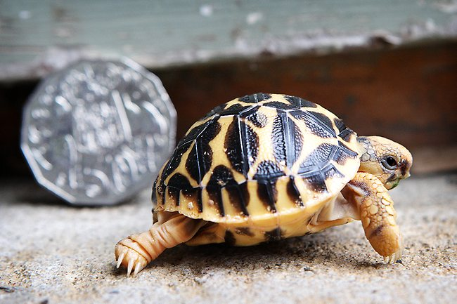 What do tortoises eat?How to Care for a Tortoise