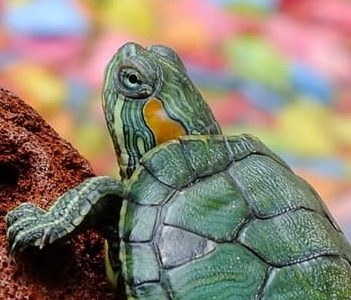 Keeping Turtles As Pets