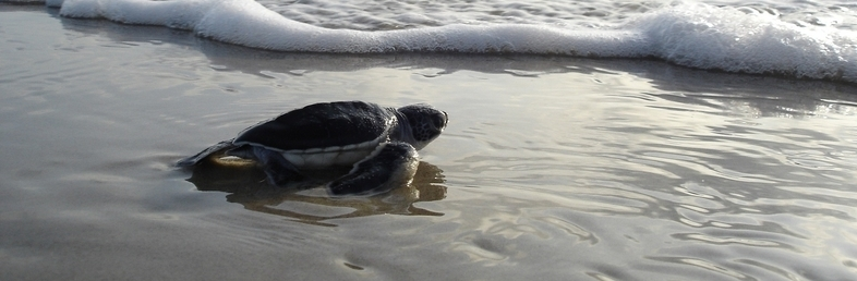 Learn about the turtles of the world