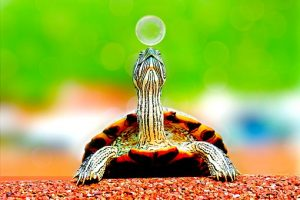 Difference Between Turtle And Tortoise And Terrapins