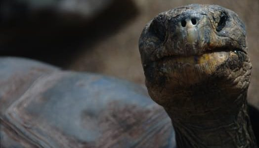 The Difference Between Turtle And Tortoise And Terrapins