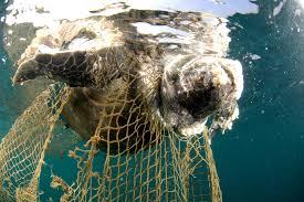 How Long Do Green Sea Turtles Live