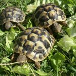 Turtles As Pets For Beginners