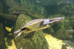 What Do Freshwater Turtles Eat?